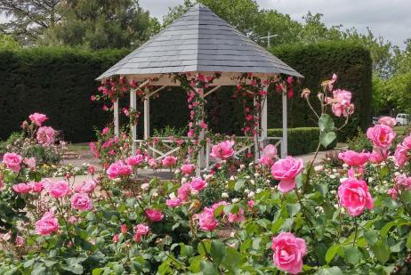 Melbourne Celebrant | Meriki Comito | St Kilda Botanical Gardens Weddings