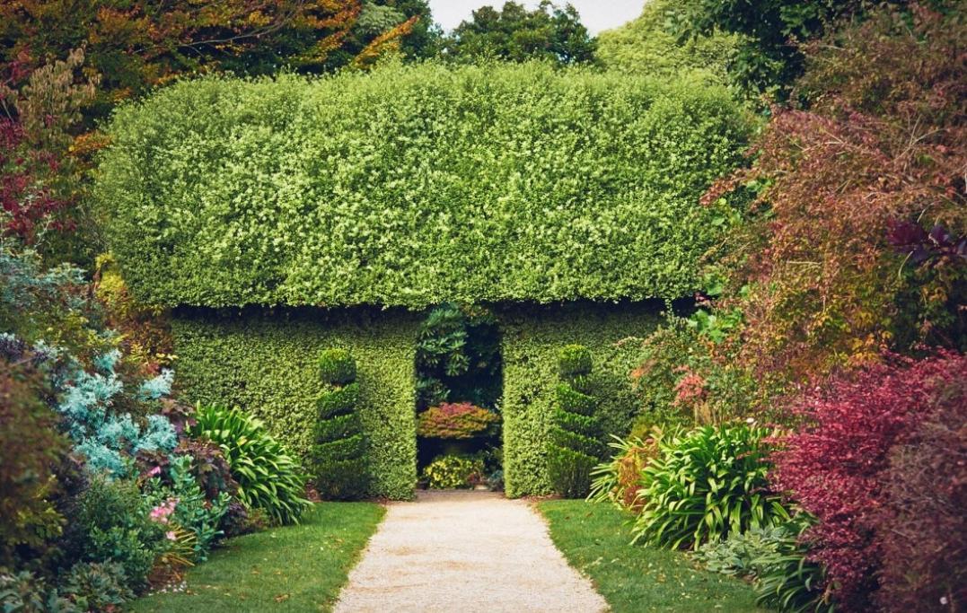 Dandenong Botanic Gardens wedding ceremony location